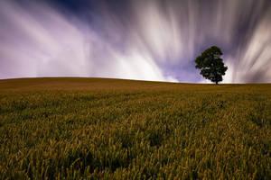 Corn Field by adamstephensonscfc