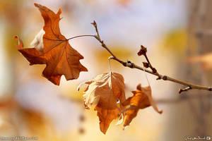 Autumn decorations by AksBan