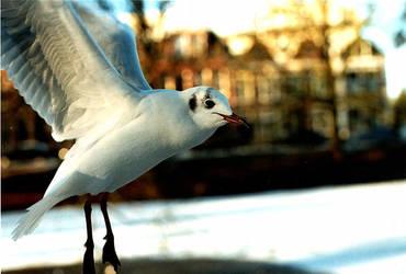 Mid-air gull by Tuinhek