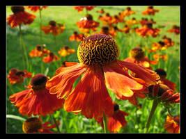 Flower Power by Tuinhek