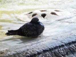 A Bath in the Fountain by Terwyn