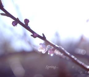 Spring has come by AnastasiaKot
