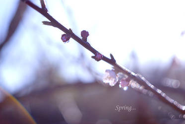 Spring by AnastasiaKot