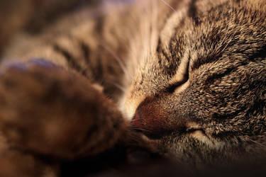 Sleeping Beauty by VBmonkey26