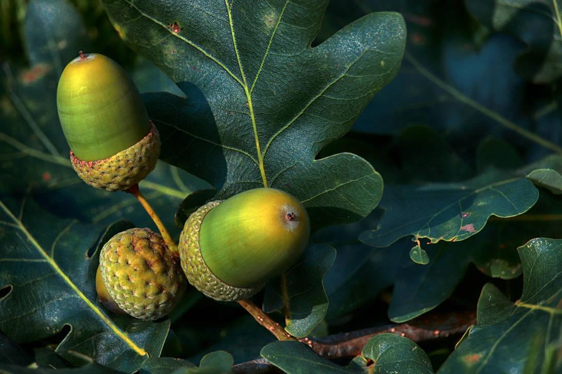The Mighty Oak by VBmonkey26