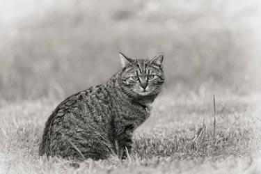 Cat by VBmonkey26