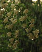 Rain by dienuca