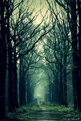 Walk through the Dark Forest by Annetjeehh