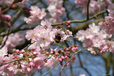 Little miss Bumblebee by Annetjeehh