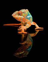 chameleonII by YlLee