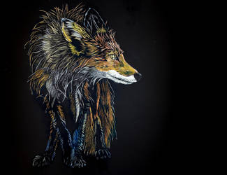 Red fox by Lara-Shychoski
