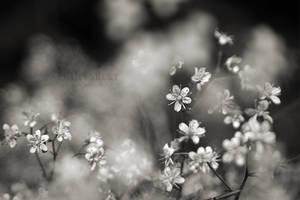 Tiny Flowers by Bittersuesz