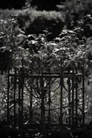 The Secret Garden IV by Bittersuesz