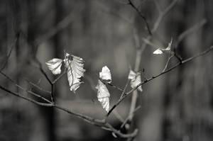 Winter Meets Spring by Bittersuesz