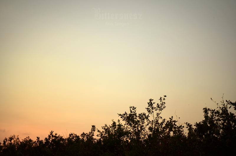 August Evening by Bittersuesz