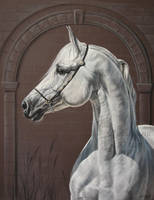 Grey arabian by Julyart