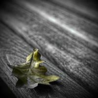 autumns repose by RickHaigh