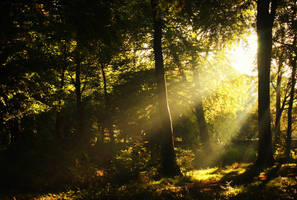 beneath the autumn sun by RickHaigh