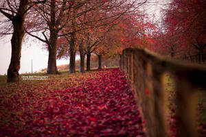 Autumn is alive... Day 106 by escaped-emotions