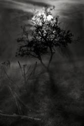 November moon by Floriandra
