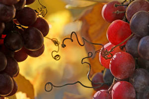 Vineyard in november by Floriandra