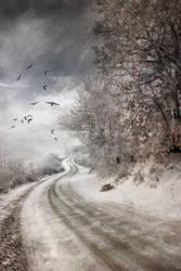 The road to Cozia by Floriandra