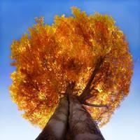burning tree by Floriandra