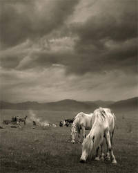 Nomads by Floriandra