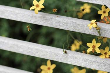 Petit Flowers by potadohs