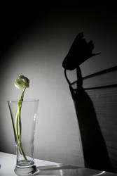 Pessimism by potadohs