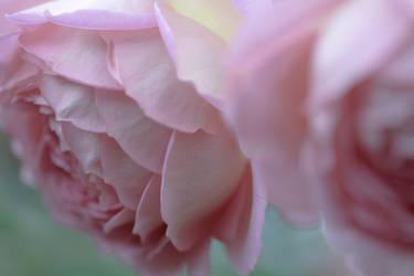 Pink Pastel by potadohs