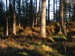 Sunny forest stock II by Wylderness