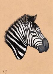 Zebra Head. by RyanShifflett