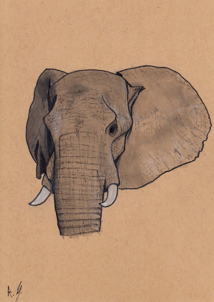 Elephant Head. by RyanShifflett