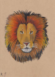 Lion Head. by RyanShifflett