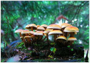 mushroom village by inmc