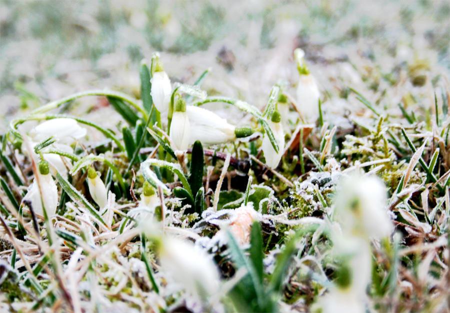 spring vs. winter by steeerne