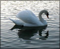 swan.:15 by steeerne