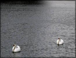 swan.:2o by steeerne