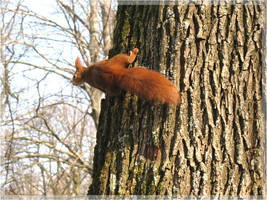 squirrel. by steeerne