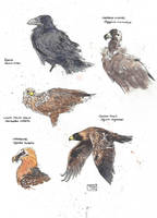 Neanderthal Birds by ExIllustrated