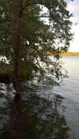 Lake by LeonoraChris