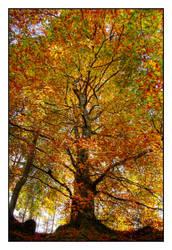 Autumn by IndustrialSilence