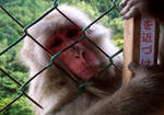 Monkey Park, Kyoto by SailorGigi
