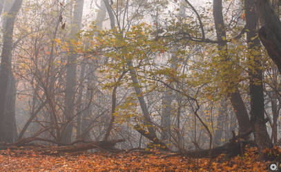 In the woods by Anod26