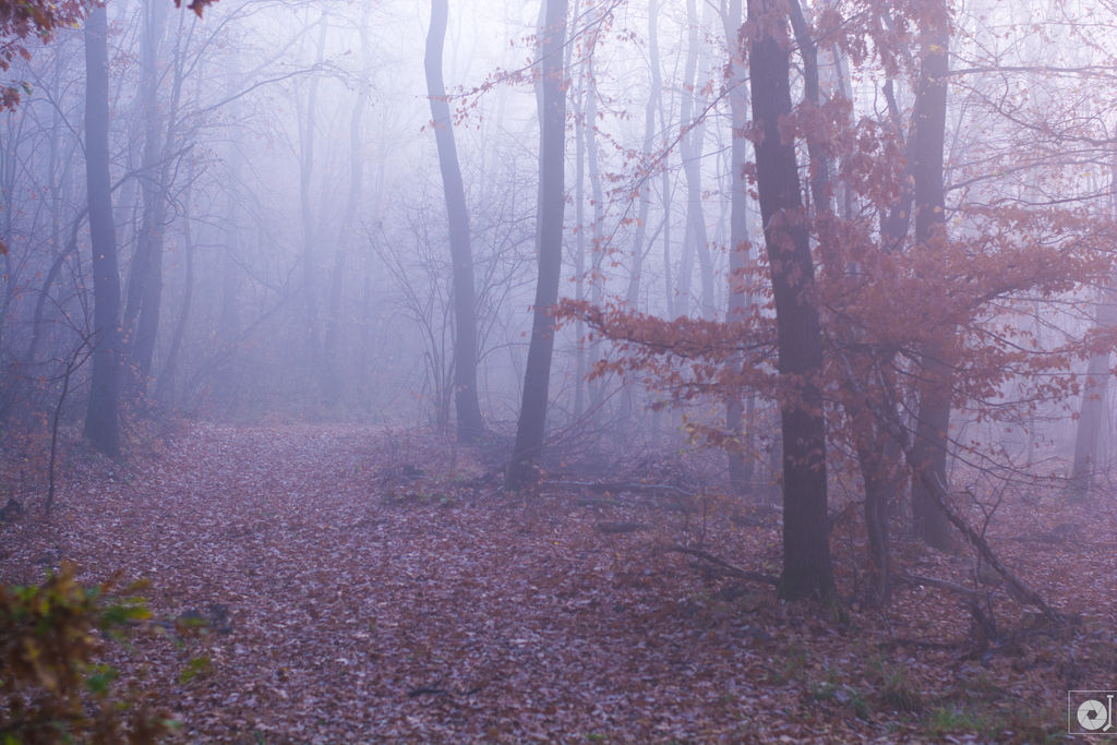 Mist by Anod26