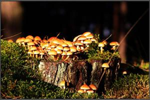Mushroom Castle by Clu-art
