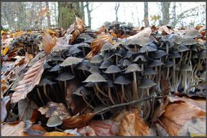 Mushroom Birth by Clu-art