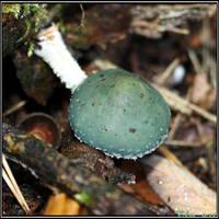 Autumn Picks: Green Forest Dweller by Clu-art