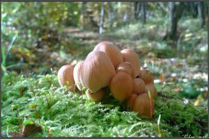 Autumn Picks: Mushroom Colony by Clu-art